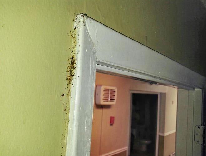 Клопы в квартире могут жить на внутренней отделке помещения
