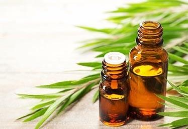 33 лучших народных средств от вшей и гнид применяем в домашних условиях для детей и взрослых масло чайного дерева