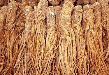 33 лучших народных средств от вшей и гнид применяем в домашних условиях для детей и взрослых корень дудника