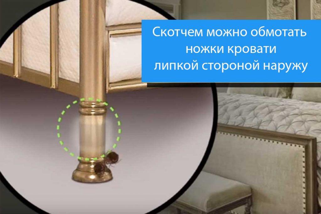 Как найти гнездо клопов у себя в квартире фото