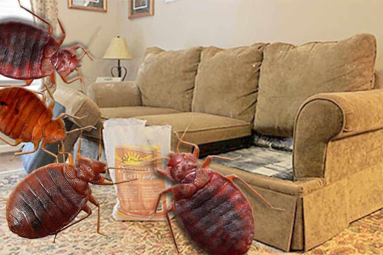 Следы клопов на мебели