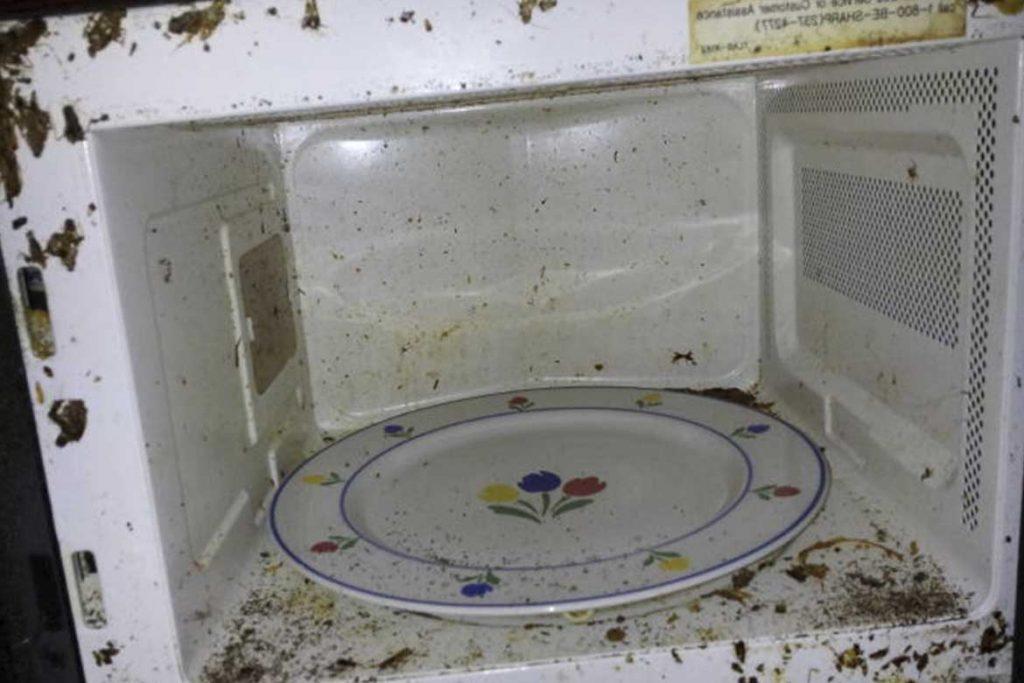 Признаки и следы появления клопов в квартире микроволновая печь