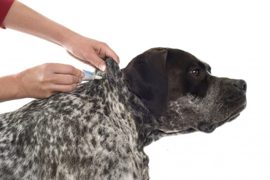 11 лучших средств для собак от блох и клещей капли