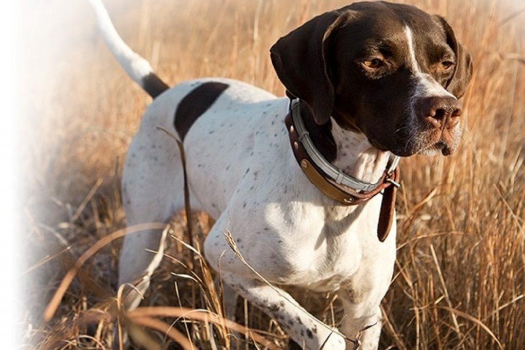 11 лучших средств для собак от блох и клещей ошейники