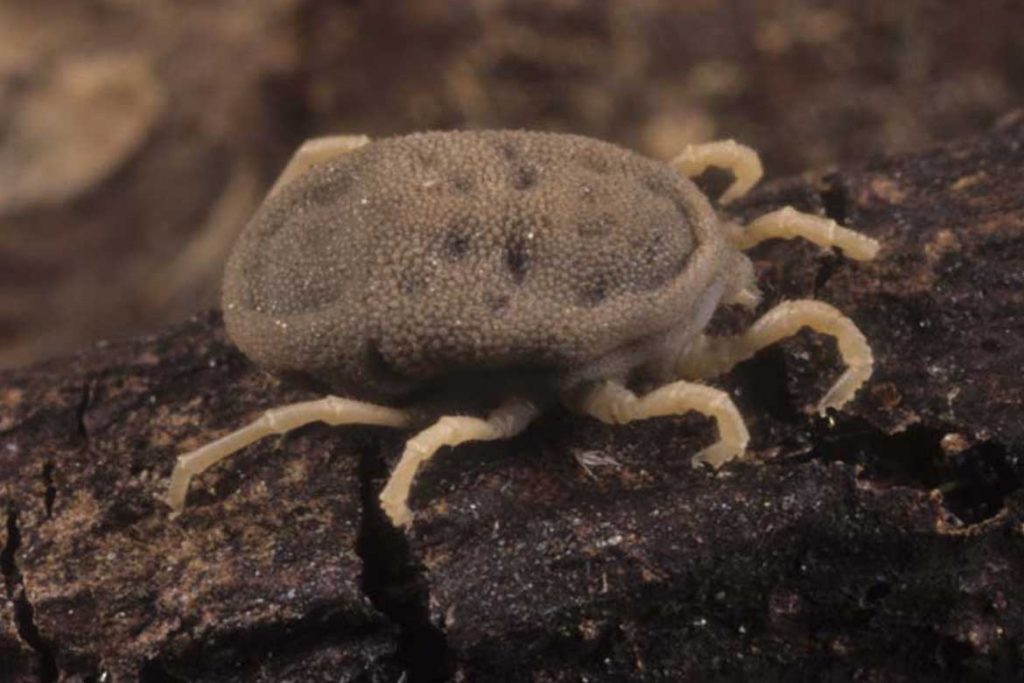 Аргасовые клещи (Argasidae) – 10 фото как выглядят укусы опасность для человека вред животноводству и как избавиться раз и навсегда