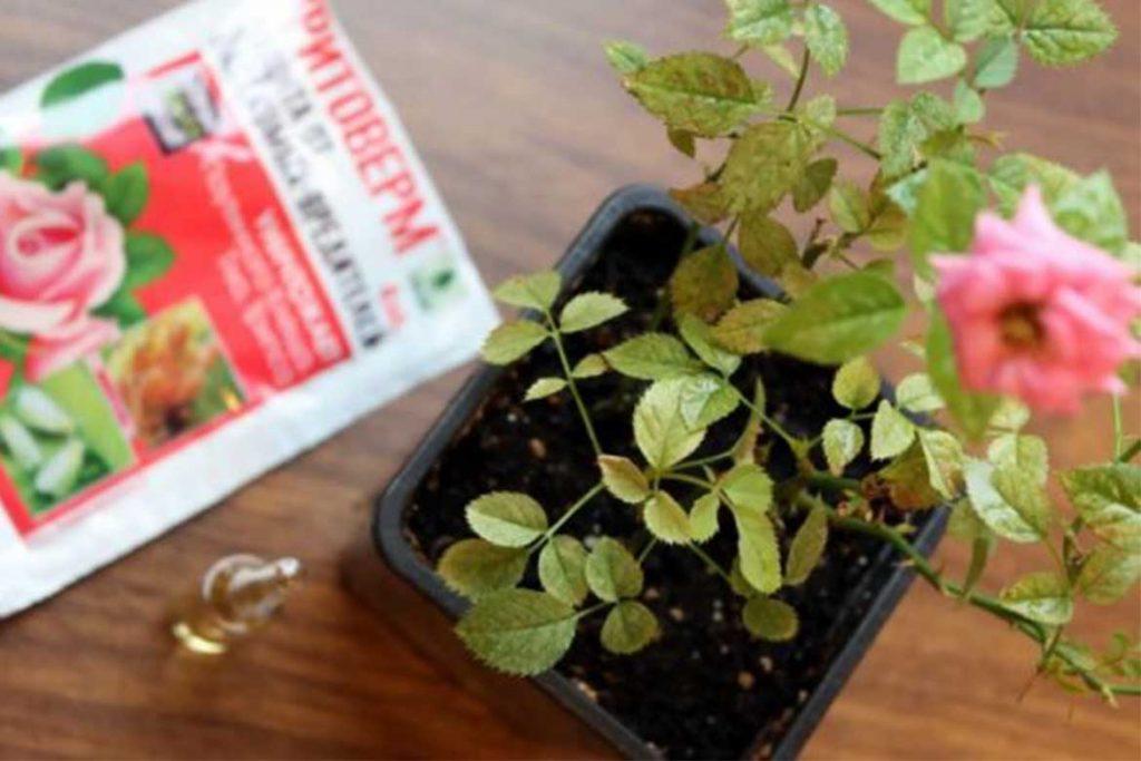 Фитоверм– средство от паутинного клеща комнатные растения