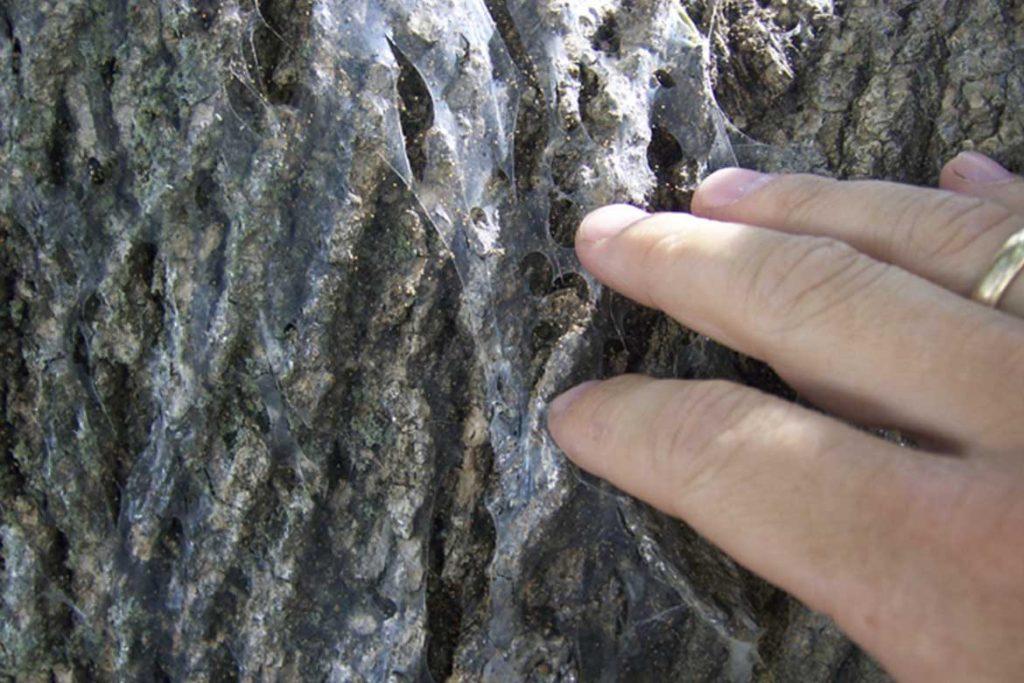 Паутинный клещ – как выглядит виды как распознать его на растениях и как от него избавиться раз и навсегда эффективные методы борьбы на деревьях