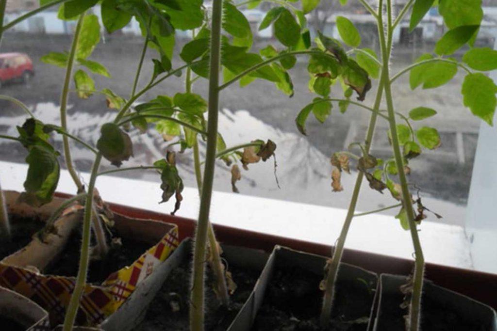 Паутинный клещ – как выглядит виды как распознать его на растениях и как от него избавиться раз и навсегда эффективные методы борьбы на рассаде
