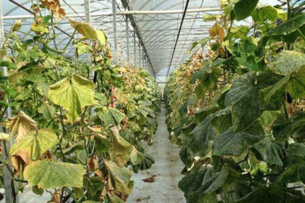 Паутинный клещ – как выглядит виды как распознать его на растениях и как от него избавиться раз и навсегда эффективные методы борьбы в теплице