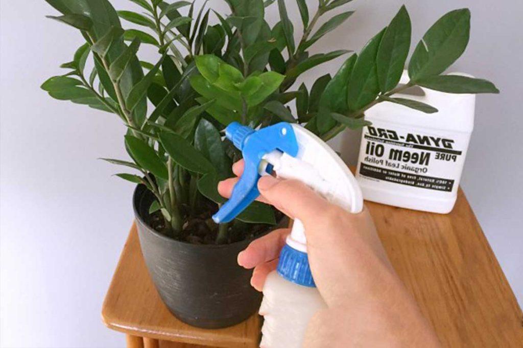 Паутинный клещ на комнатных растениях химические