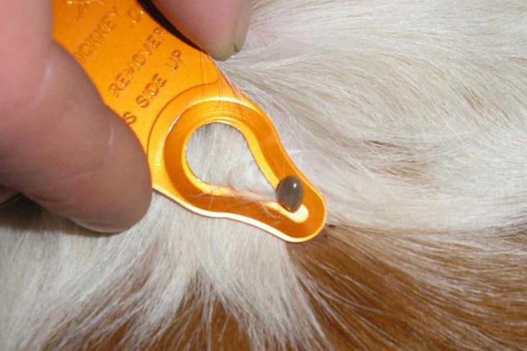 ТОП 16 приспособлений для вытаскивания клеща выкручиватели пинцеты ручка-лассо щипцы крючки Клещедёр Tick Key – Клинкер-брелок для ключей