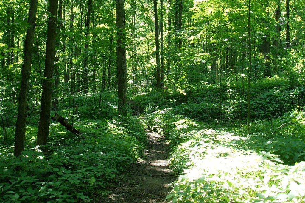 Виды лесных клещей