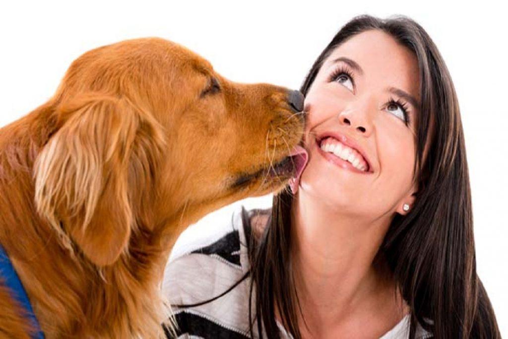Бравекто для собак – выжить любой ценой когда можно гладить после капель