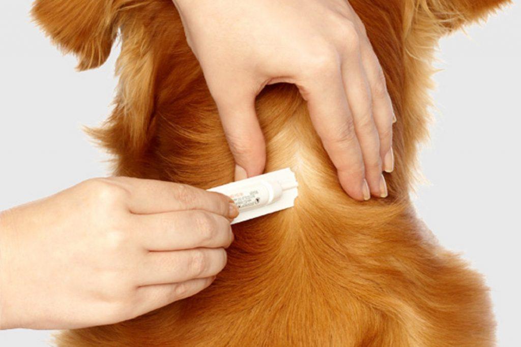 Бравекто для собак – выжить любой ценой польза и вред