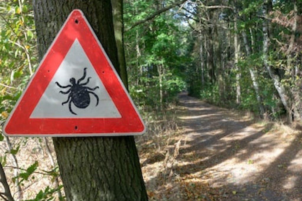 Чем опасны клещи для человека – профилактика энцефалита и укусов иксодовых клещей