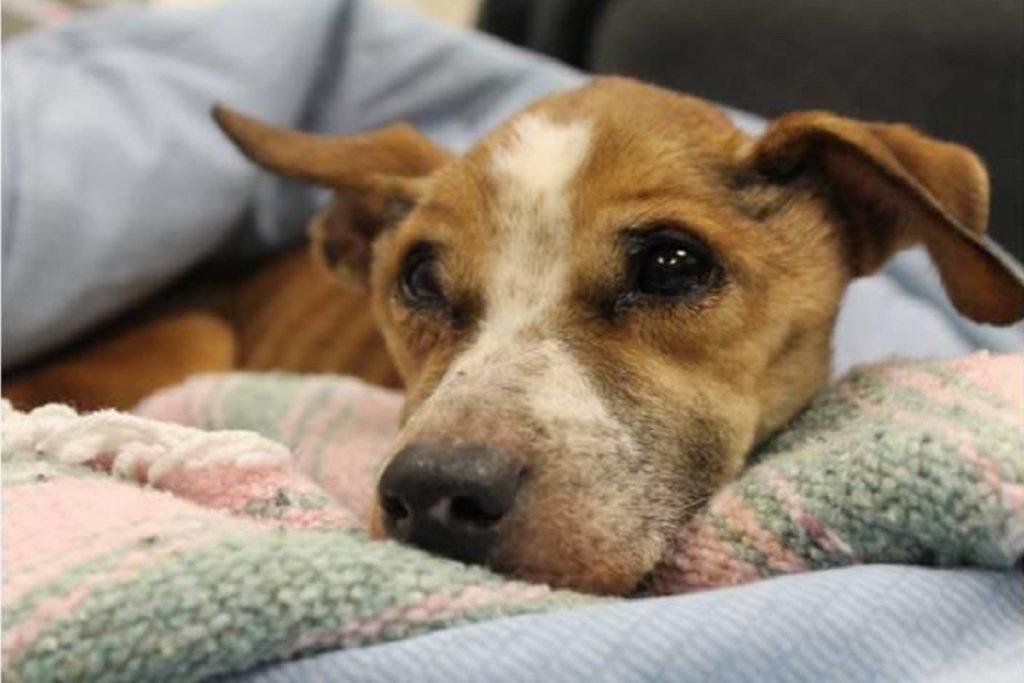Инспектор – капли для собак: инструкция по применению, отзывы, действие капель