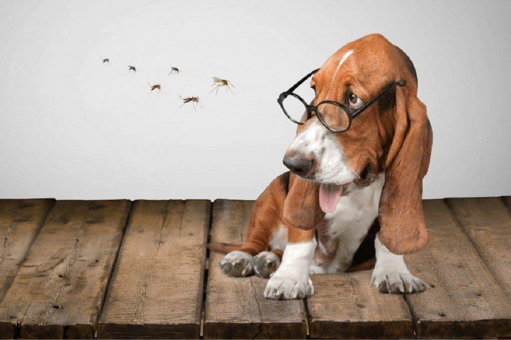 Инспектор – капли для собак: инструкция по применению, отзывы дирофиляриоз