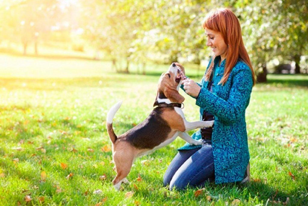 Инспектор – капли для собак: инструкция по применению, отзывы опасен ли для людей