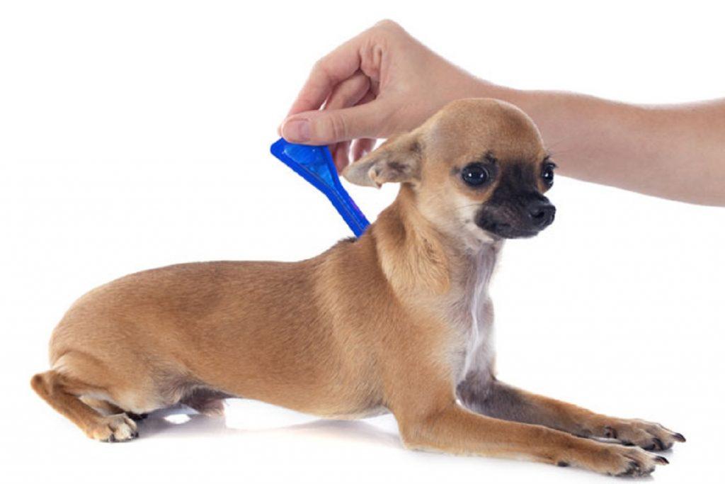 Инспектор – капли для собак: инструкция по применению, отзывы преимущества и недостатки