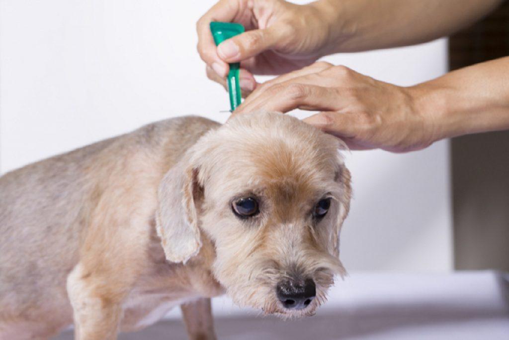Инспектор – капли для собак: инструкция по применению, отзывы и советы ветеринаров