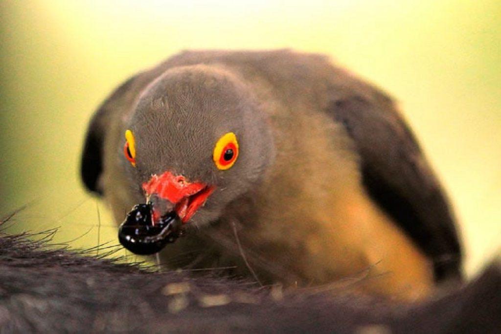 Сезон активности клещей в России – когда начался и когда закончится птица ест клеща