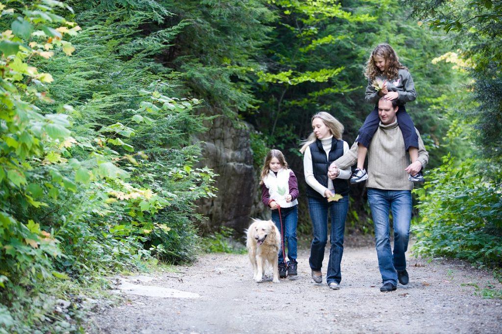 Страховка от клеща – вопросы-ответы – отзывы – страховые случаи страховка семьи