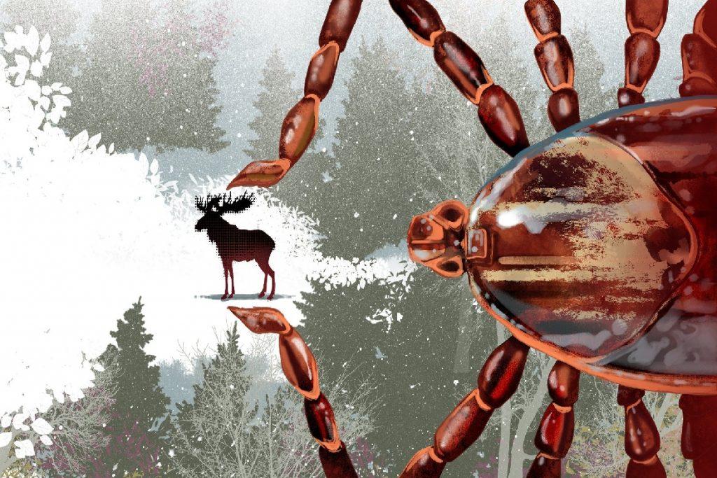 Влияние температуры на жизнь клещей зимой