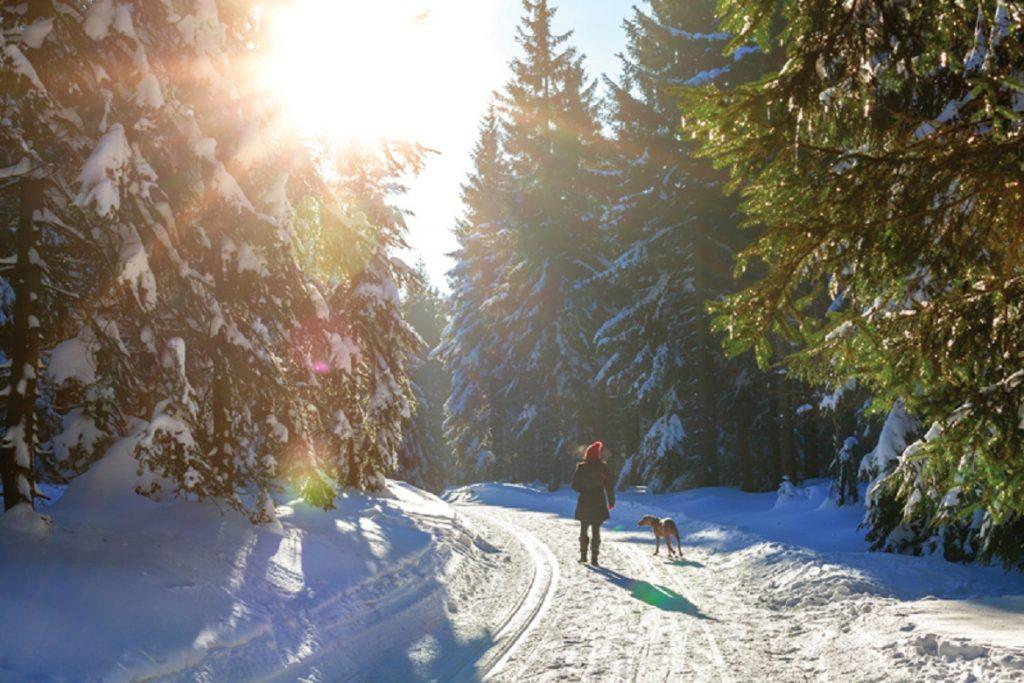 Влияние температуры на жизнь клещей прогулка с собакой