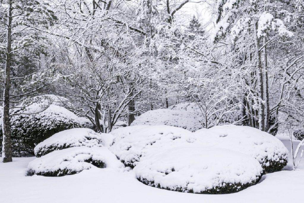 Влияние температуры на жизнь клещей в лесу