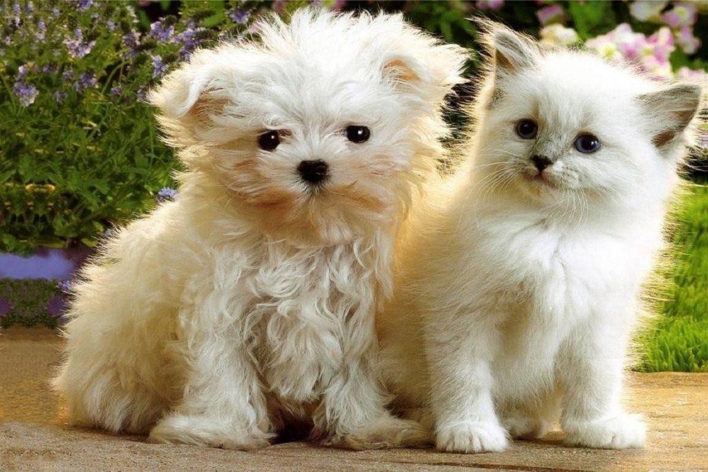 10 лучших средств Барс от блох и клещей, для собак, кошек, щенков, котят действие капель