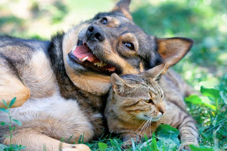 Дружба собаки и кошки - вопросы и ответы