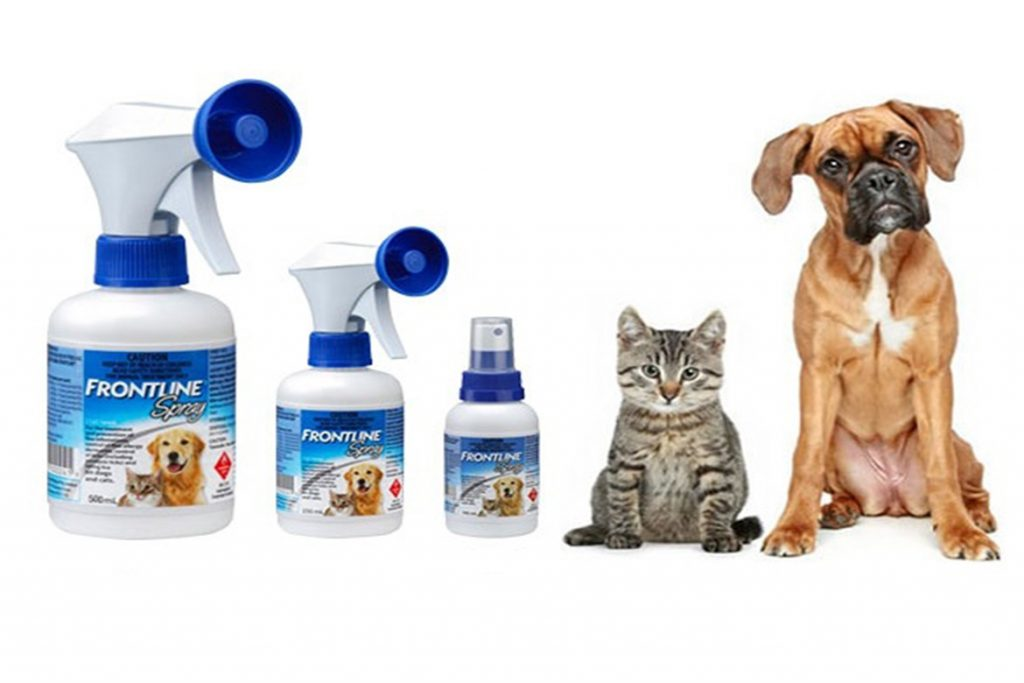 10 лучших средств от клещей для кошек и котят