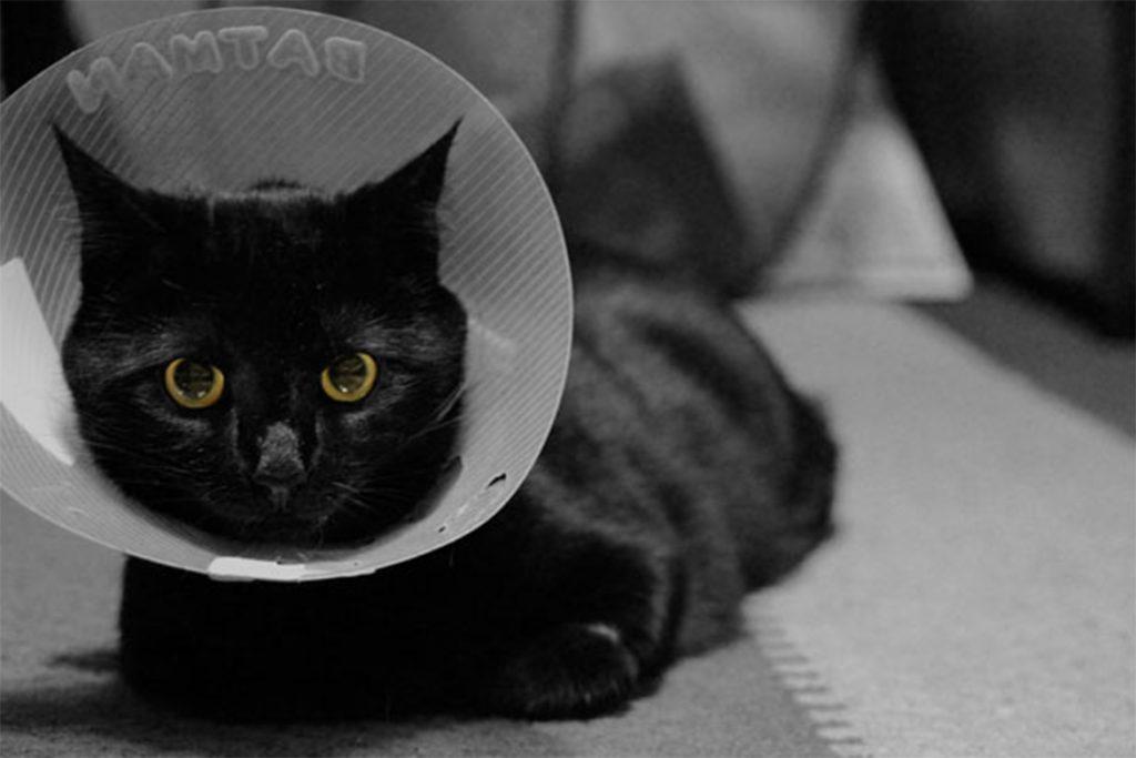 10 лучших средств от клещей для кошек и котят отзывы