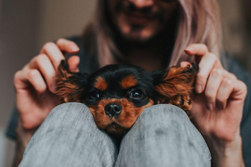 11 лучших средств для собак от блох и клещей преимущества и недостатки