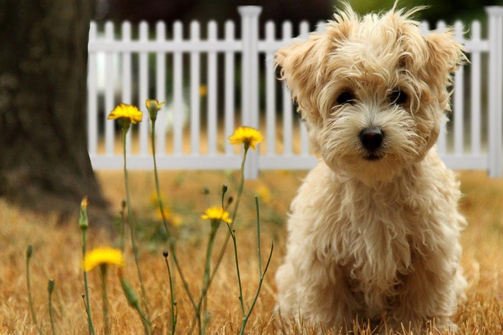 11 лучших средств для собак от блох и клещей отзывы
