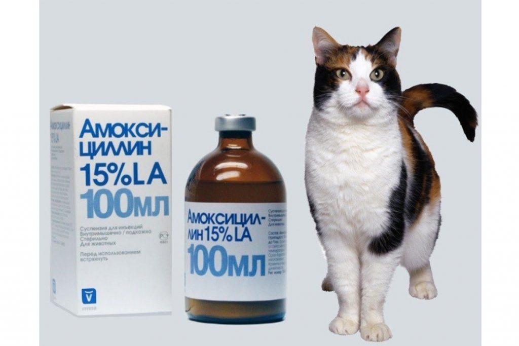 4 вида подкожного клеща у кошек и котов: кто беспокоит животное, как обезвредить, меры профилактики Амоксициллин