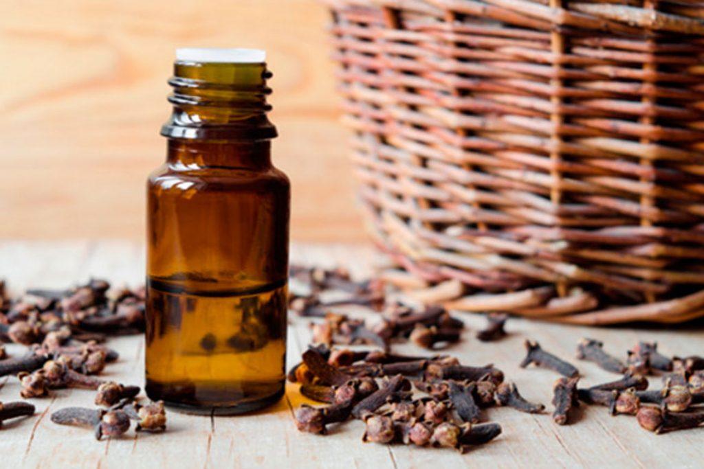 47 народных средств для людей, которых боятся клещи – Эфирное масло гвоздики