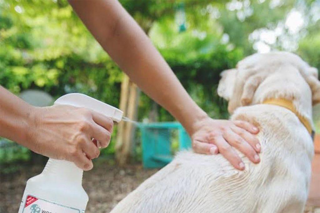 5 лучших способов, чем защитить (обработать) собаку от клещей спреи