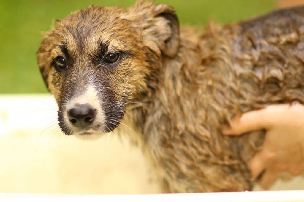 5 лучших способов, чем защитить (обработать) собаку от клещей шампунь