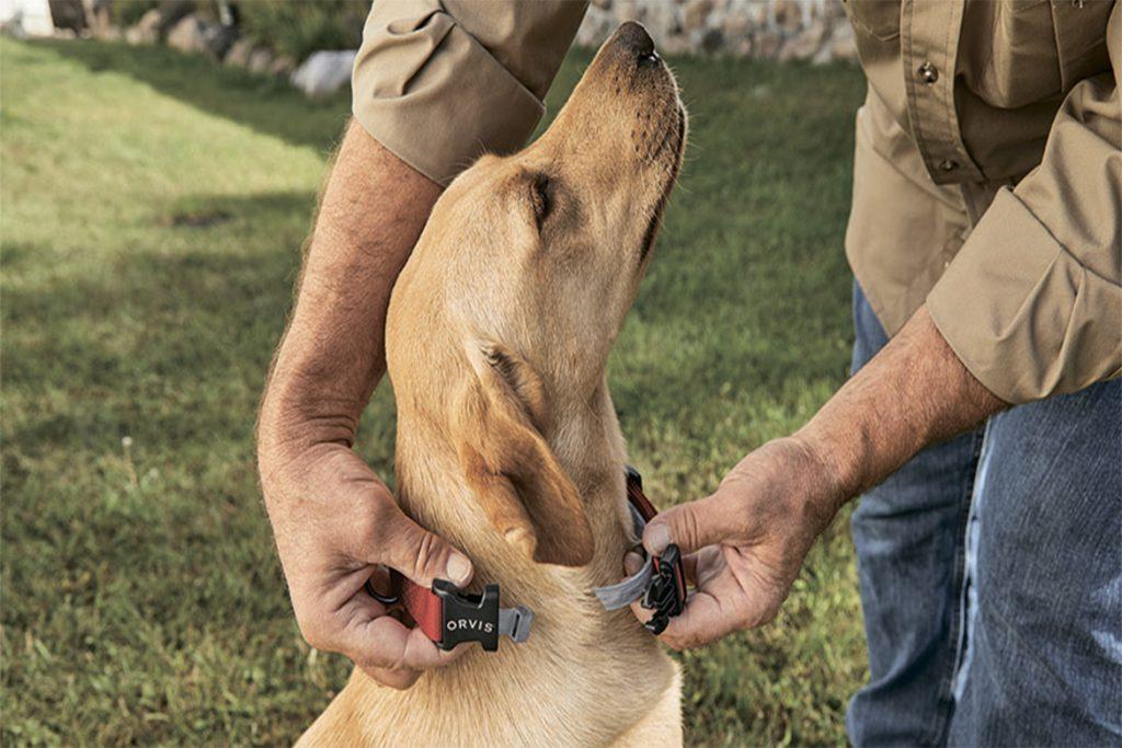 5 лучших способов, чем защитить (обработать) собаку от клещей ошибки