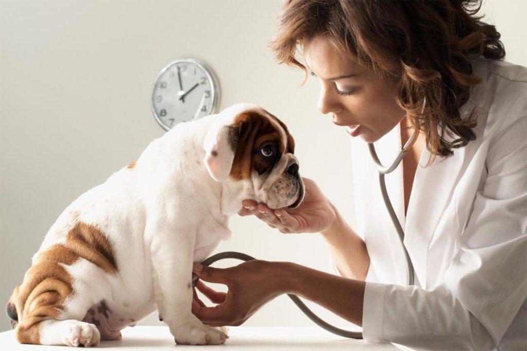 5 лучших способов, чем защитить (обработать) собаку от клещей преимущества и недостатки