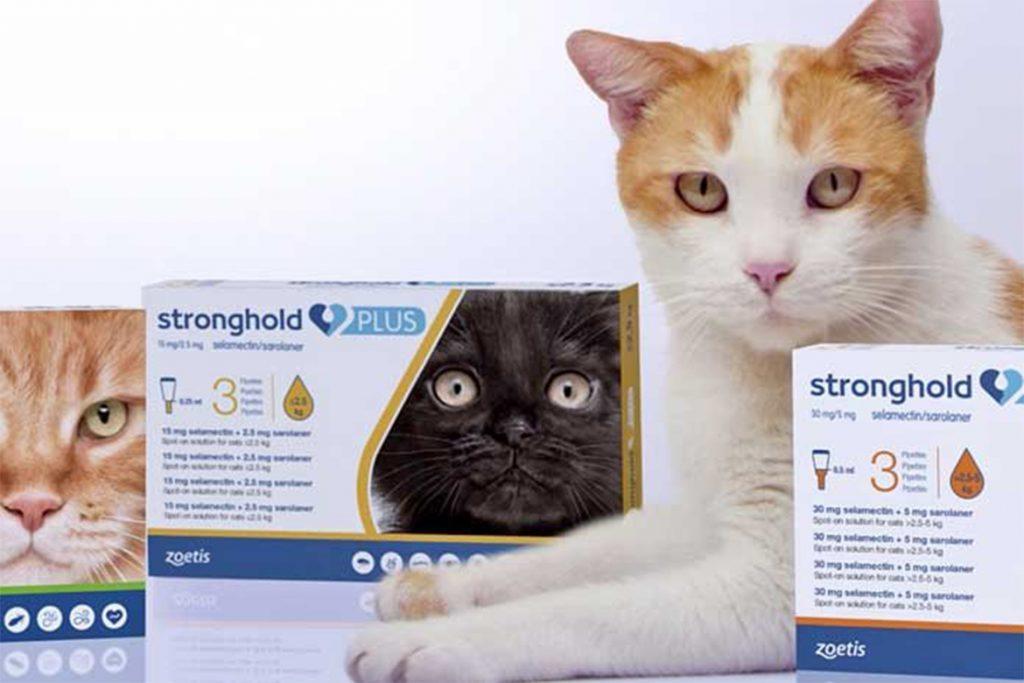 7 лучших капель на холку от клещей для кошек и котят Стронгхолд