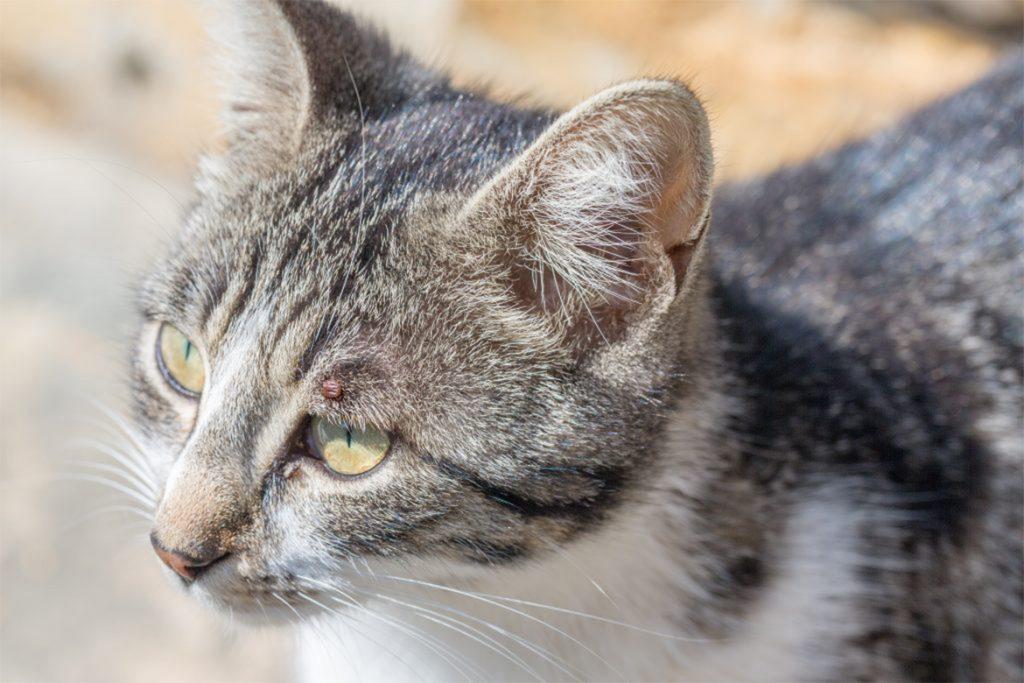 7 лучших капель на холку от клещей для кошек и котят отзывы ветеринаров и заводчиков