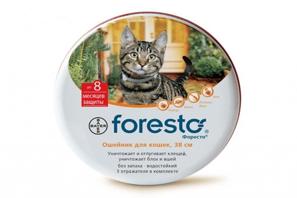 8 лучших ошейников от клещей для кошек и котят – отзывы ошейник Foresto