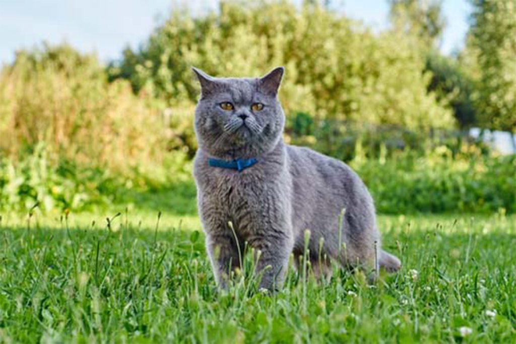 8 лучших ошейников от клещей для кошек и котят – отзывы ветеринаров