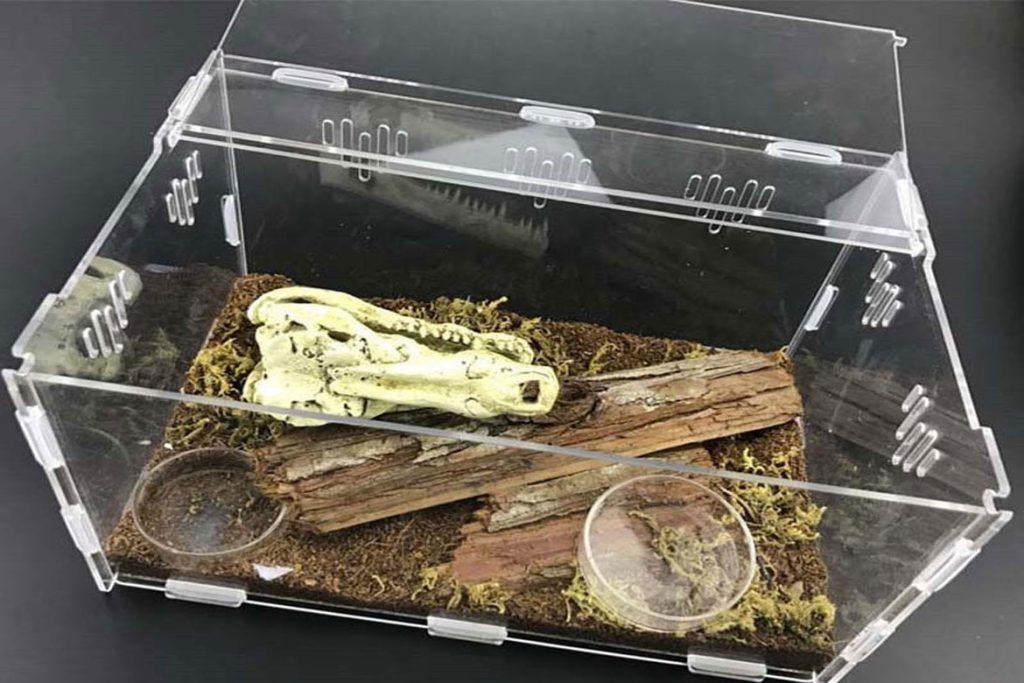 Клещи на рептилиях, змее, ящерицах – профилактика