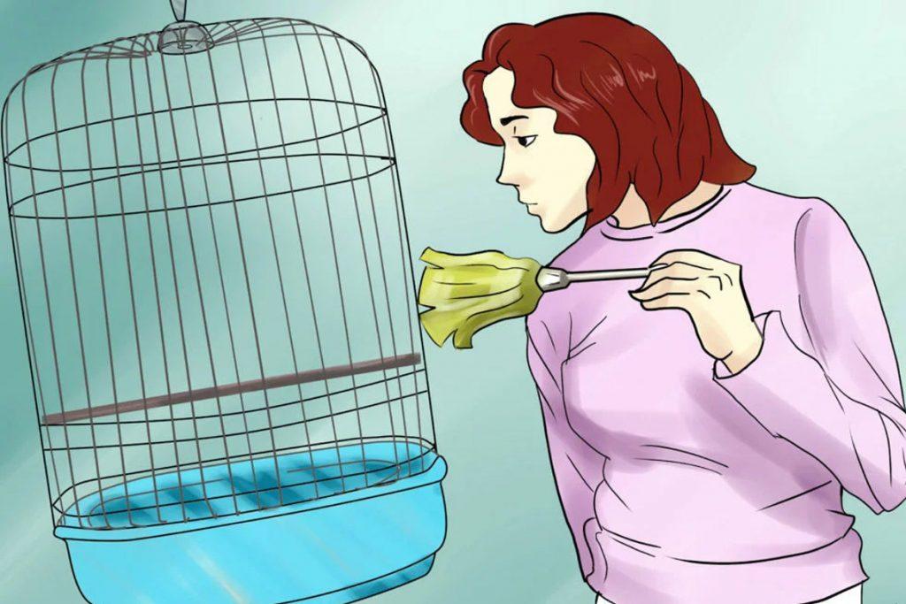 Поражение клещом волнистого попугая – дезинфекция