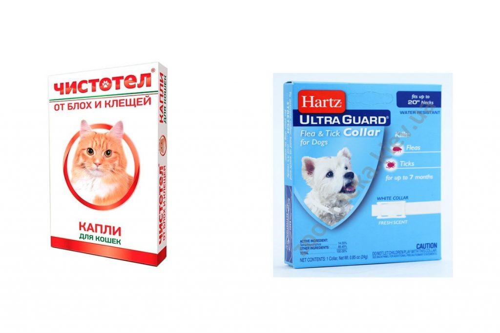 Вши у кошек – описание, фото, как выглядят - капли
