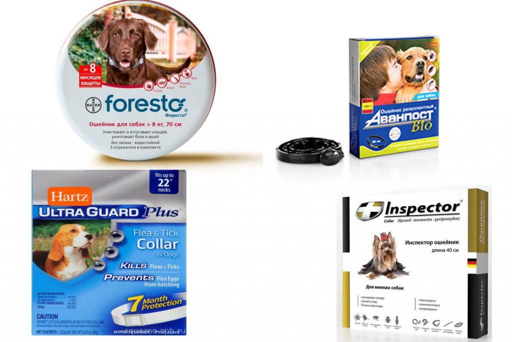 Вши у собак – описание, фото, как выглядят - ошейники