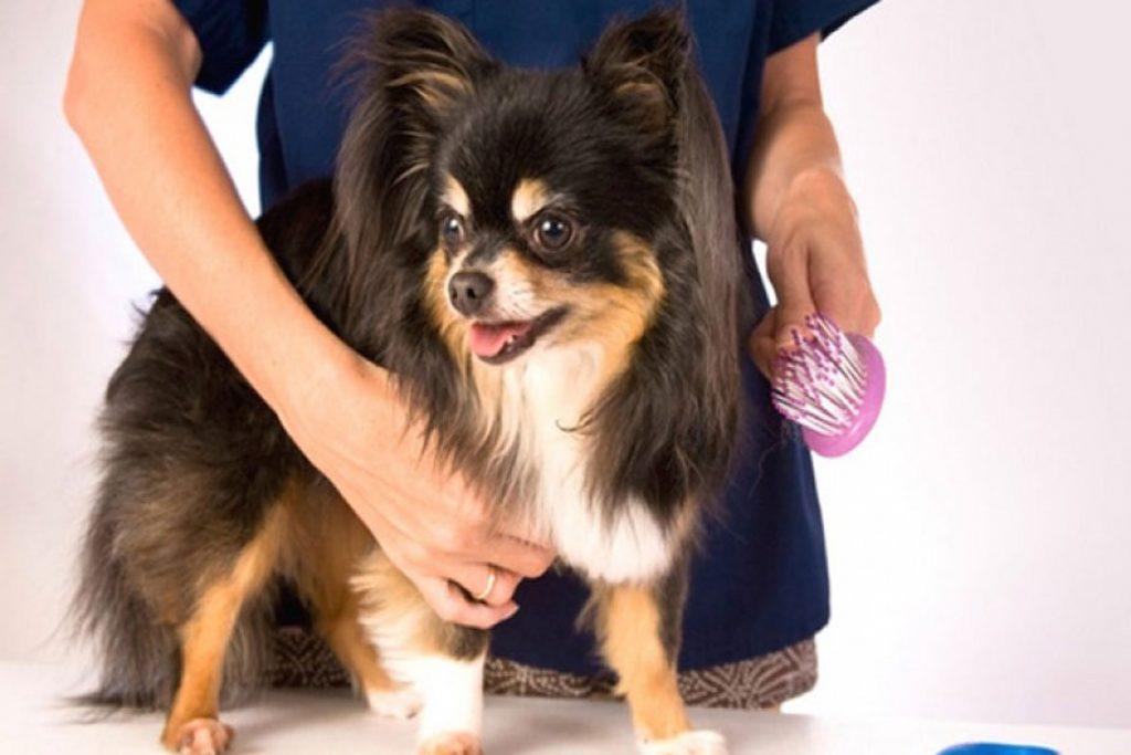 Вши у собак – описание, фото, как выглядят - осмотр